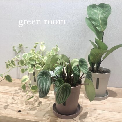 new plant.